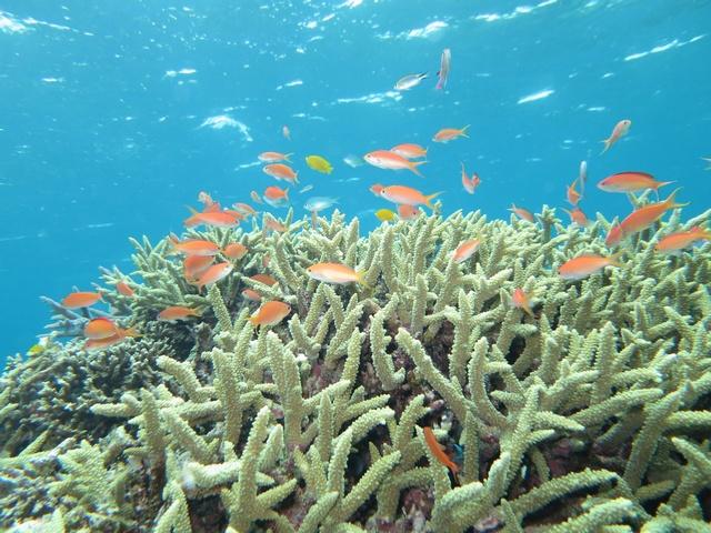 米原のサンゴ礁